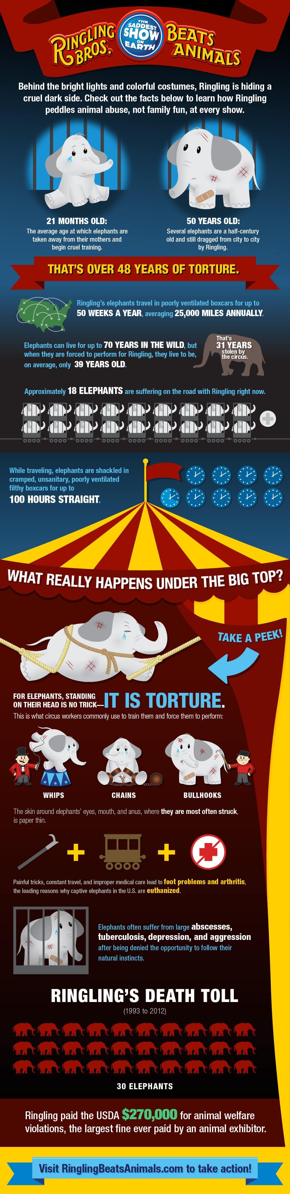 infografía abuso a elefantes en el circo