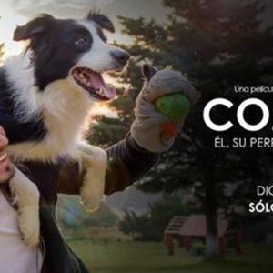Cometa. Él, su perro y su mundo (una película y una causa)