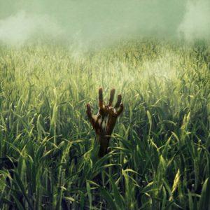 Vincenzo Natali adaptará In The Tall Grass de Stephen King para Netflix