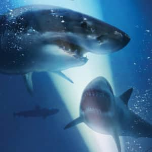 La secuela 47 Meters Down: The Next Chapter revela teaser tráiler