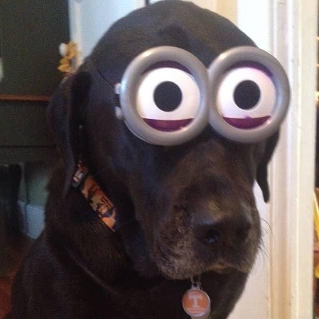 Minion dog