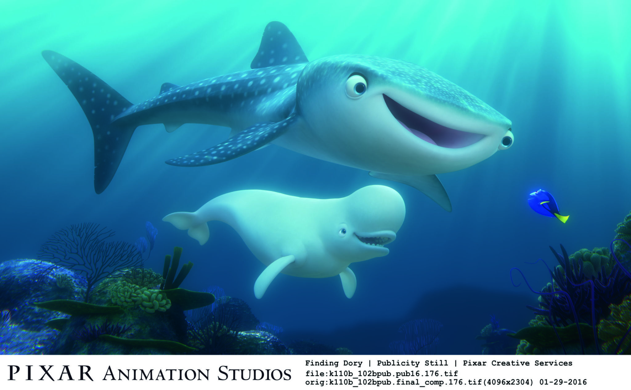 """""""Finding Dory"""" introduces new characters to the big screen, including a whale shark named Destiny who's nearsighted, and a beluga whale named Bailey who thinks his biological sonar skills are on the fritz. Featuring Kaitlin Olson as the voice of Destiny and Ty Burrell as the voice of Bailey, """"Finding Dory"""" opens on June 17, 2016. ©2016 Disney•Pixar. All Rights Reserved."""