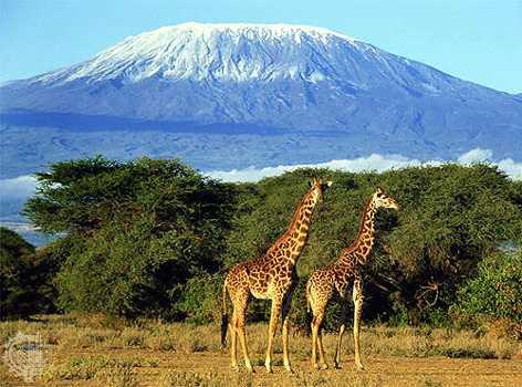 Panorámica del Kilimanjaro
