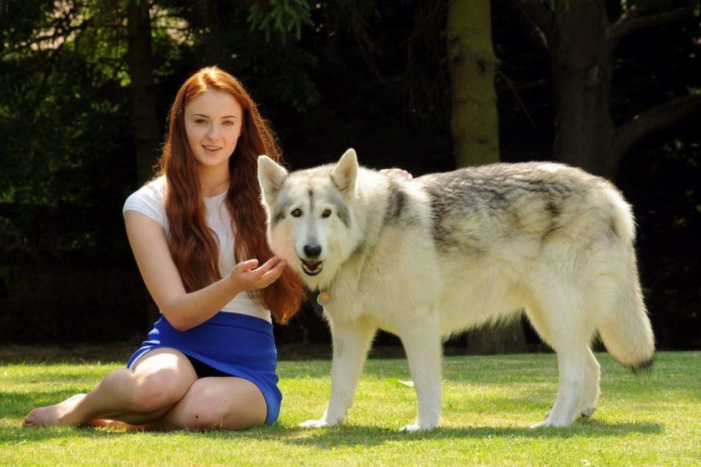 Sansa y Dama