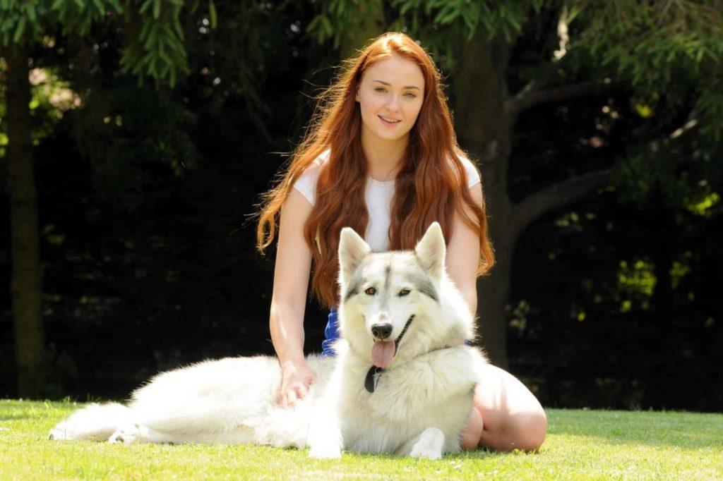Sansa y Dama #2